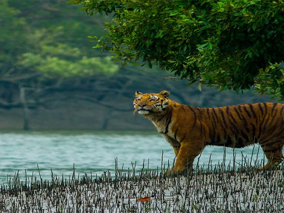 Sundarbans, Bangladesh|Hotels, Restaurant & Food